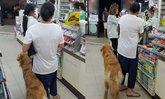 หวิดดราม่า หญิงจูงสุนัขเข้าร้านสะดวกซื้อ ปล่อยเลียสินค้า