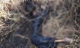 หนุ่มใหญ่หายตัวครึ่งเดือน พบศพเหลือแต่โครงกระดูกไม่มีหัว