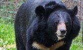 หมีตก ฮ.ที่เขาใหญ่ตาย ขณะนำปล่อย-ตั้งกรรมการสอบ