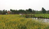 พบสถานที่ท่องเที่ยวสะพานไม้ร้อยปีผ่ากลางทุ่งนาที่โคราช