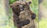 สุดอบอุ่น 2 พี่น้องลูกหมีกอดกันแน่น หลังบังเอิญพบกันอีกครั้ง