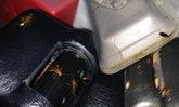 รถทัวร์วีไอพีแถมฟรีกองทัพแมลงสาบ