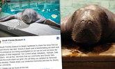 """""""วัวทะเล"""" อายุมากที่สุดในโลก จบชีวิตลงด้วยเหตุน่าเศร้า"""