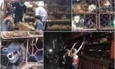 กลุ่มคนรักสุนัขในจีนขวางรถบรรทุก ช่วยน้องหมากว่าพันตัว เตรียมฆ่าเทศกาลกินเนื้อสุนัข