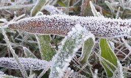 เลยอากาศเย็นเกิดปรากฏการณ์น้ำค้างแข็ง