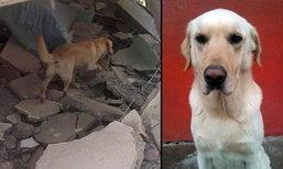 """สะเทือนใจ! """"สุนัข"""" ช่วยเหยื่อแผ่นดินไหวเอกวาดอร์ จนเหนื่อยตาย"""