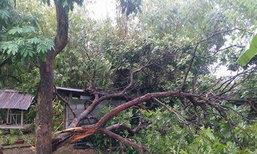 พายุพัดถล่มนครพนมต้นไม้ล้มทับบ้านเสียหาย
