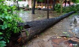 พายุพัดต้นตาลวัดธาตุพนม อายุกว่า 100 ปี โค่นทับสองแม่ลูกดับ