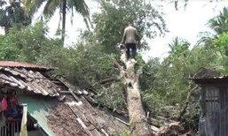 พายุกระหน่ำอ่างทองต้นมะขาม70ปีล้มทับบ้านพัง
