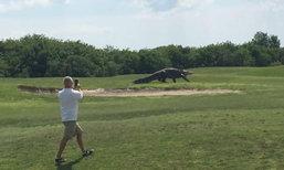 นึกว่าอยู่ Jurassic Park จระเข้ยักษ์เดินชิวๆ สนามกอล์ฟ