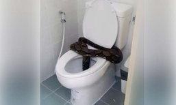 หลอน! งูเหลือมยักษ์โผล่นั่งบนชักโครก