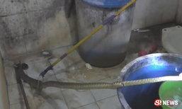 สาวอ่างทองสะดุ้ง! เจอเข้ากับตัว งูเห่า 2 เมตรขู่ฟ่อในห้องน้ำ