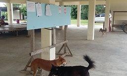 ชัยภูมิ-หมาวัดบุกกัดเอกสารบัญชีชื่อประชามติ