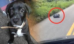 คนขับรถผ่านตกใจ เจอถุงขยะขยับได้ ข้างในเป็นลูกสุนัขโดนทิ้ง