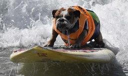 แคลิฟอร์เนียจัดงาน ให้สุนัขเจ้าของได้ร่วมเล่นเซิร์ฟกันอย่างสนุก