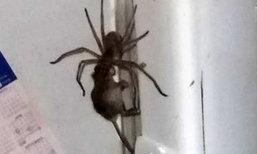 ห่วงโซ่อาหารสุดช็อก คลิปคนดูเป็นล้าน แมงมุมเขมือบกินหนู