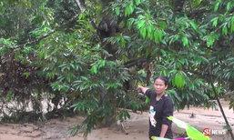 นาทีชีวิต แม่พาลูกชายวัย 10 ขวบ ปีนต้นทุเรียนหนีน้ำป่า