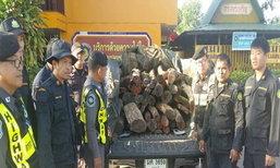ปราจีนบุรียึดไม้พะยูง44ท่อนค่ากว่า3ล้าน