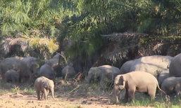 โขลงช้างป่าบุกบ้านชาวจันทบุรี-จนท.เร่งไล่