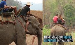 """เพจท่องเที่ยวชื่อดัง วอนหยุดสนับสนุน """"ทัวร์ขี่ช้างในไทย"""""""