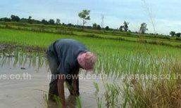 ผอ.ชป.12เผยเกษตรกรทำนาเกินกรอบ1เท่าเร่งบริหารจัดการ