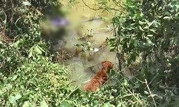 ซึ้งใจ! สุนัขกตัญญูแช่น้ำเฝ้าศพข้ามคืน หลังผู้ตายเคยให้ข้าวกิน