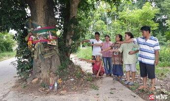 แห่ขอหวยจากต้นมะพลับร้อยปี ใครคิดจะโค่นแขนขาขาด