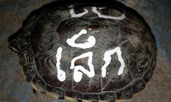 แชร์ว่อน! คู่รักปล่อยเต่า เขียนชื่อสะเดาะเคราะห์บนกระดอง