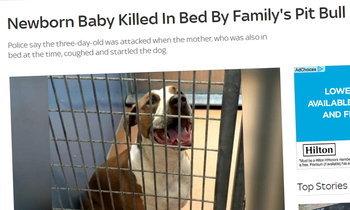 สะเทือนใจ หมาพิตบูลตกใจเสียงไอ ขย้ำกัดทารกดับอนาถ