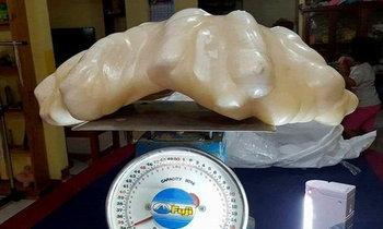 ชาวประมงเก็บหอยมุกยักษ์ 3 พันล้านบาทไว้ เพราะไม่รู้ว่ามีค่า
