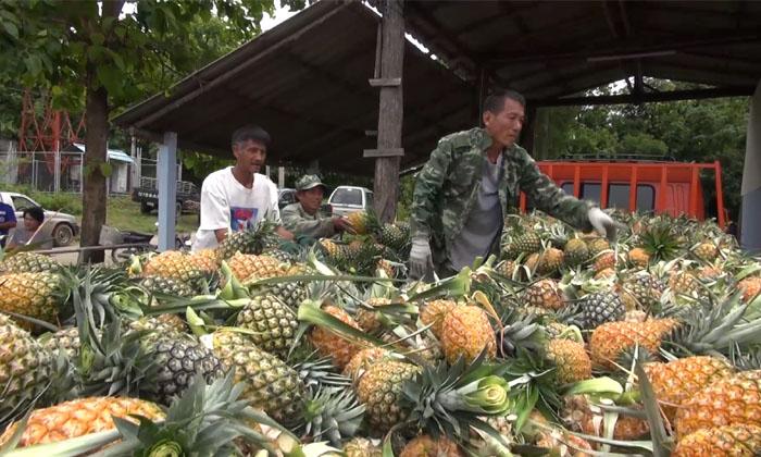 ผู้ใหญ่ใจบุญ ลงขันซื้อสับปะรด 20 ตัน แจกฟรีกทม.