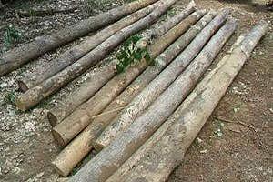 จนท.บุกจับไม้สักเถื่อนกว่า 70 ท่อน-คนร้ายลอยนวล