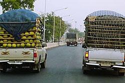คนขับรถขนผักงง! มีชิ้นส่วนขาห้อยติดท้ายรถ