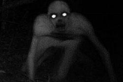 ฮือฮา! ภาพตัวประหลาดตาเรืองแสง ในป่าสหรัฐ