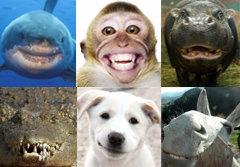 ภาพหาดูยาก! เหล่าสัตว์โลก อวดรอยยิ้ม