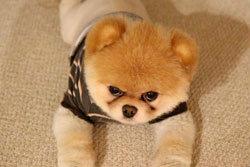 สุนัขที่น่ารักที่สุดในโลก มีคนกดไลค์ล้านกว่าคน