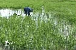 หอการค้าเสนอภาครัฐบริหารพื้นที่การเกษตรให้มีคุณภาพ