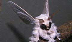 นักวิทยาศาสตร์โพสต์ภาพสัตว์ประหลาดตาโปนขนฟู