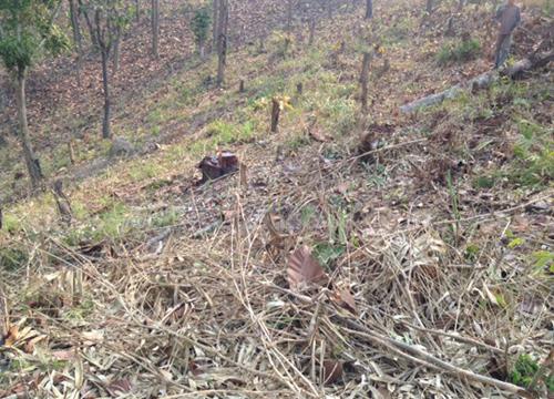 จนท.ยึดคืนป่าสงวนแห่งชาติหลังถูกบุกรุก
