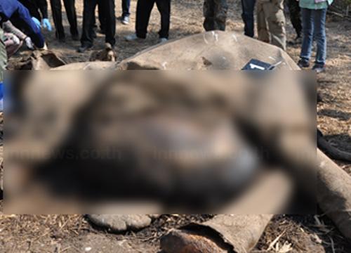 ผู้ว่าเพชรบุรีให้1แสนนำจับฆ่าช้างแก่งกระจาน
