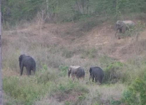ผู้ว่าเพชรบุรีลงป่าเด็งตรวจช้างลักษณะพิเศษ