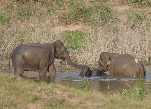 ผู้ว่าเพชรบุรีเดินเท้าพิสูจน์จุดพิกัดพบช้างเผือก