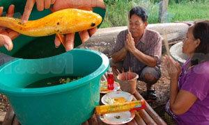 แห่ขอหวยยักษ์ ปลาช่อนทอง หลังให้โชคถูกยกหมู่บ้านสกลนคร
