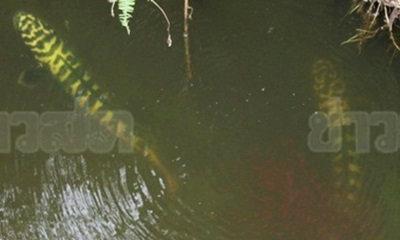 ฮือฮาปลาประหลาด หัวเป็นลายตัวเลข-ดุร้าย ชาวบ้านไม่กล้าจับ