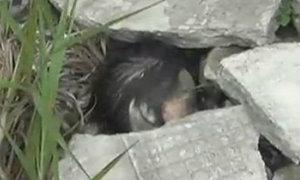 พบหัวมนุษย์ถูกฆ่าตัดคอทิ้งป่า ที่แท้หัวตุ๊กตา