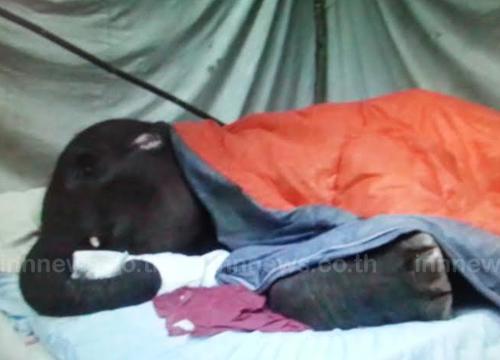 ลูกช้างน้อยพังแตงโมลำปางล้มแล้ว