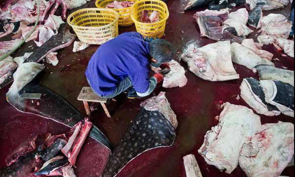ผงะ! วีดีโอแอบถ่ายในจีน แฉโรงชำแหละปลาหายาก