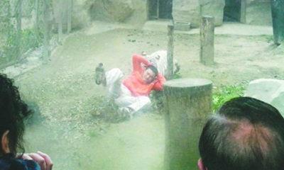 หนุ่มจีนพิเรนทร์ปีนเข้ากรงเสือ โดนตะครุบงับสยอง