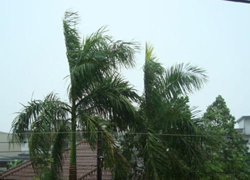 อุตุฯเผยไทยฝนฟ้าคะนองลมกระโชกแรงขึ้นกทม.ร้อน
