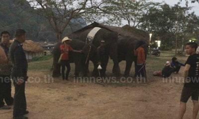 ช้างตื่น! เตะสาววัย 18 ขณะเล่นน้ำเจ็บ